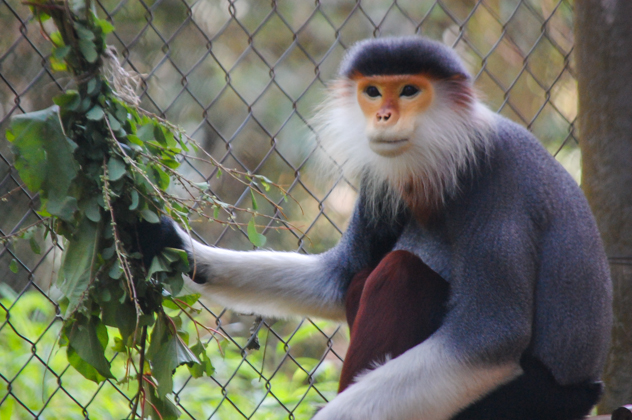 Vietnam : Cuc Phuong National Park